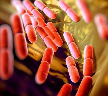Lợi khuẩn (Probiotics) có thực sự giúp trị được mụn ?