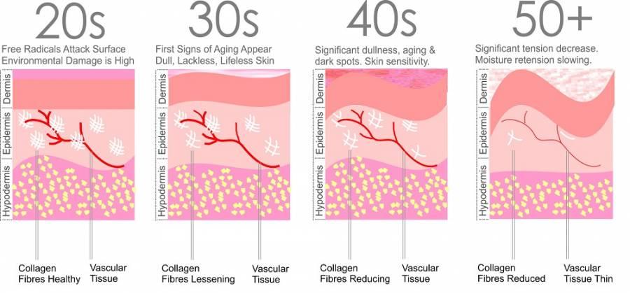 Các thành phần giúp da trẻ khỏe Collagen, Elastin, và Glycosaminoglycans 1