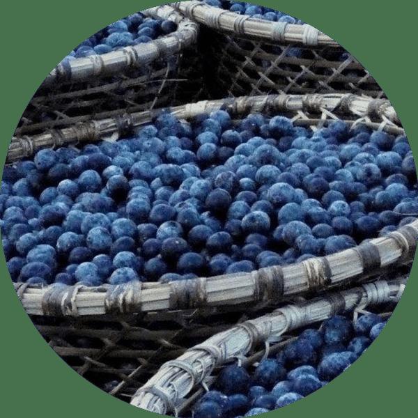 Kem dưỡng ẩm có màu 100% Pure Fruit Pigmented® Tinted Moisturizer 4