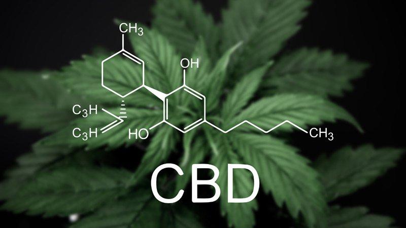 Serum hữu cơ từ CBD Zatik Face Oil Calming Serum 2