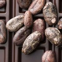 Thành phần tiêu biểu son lì 100% PURE: Bơ Cacao