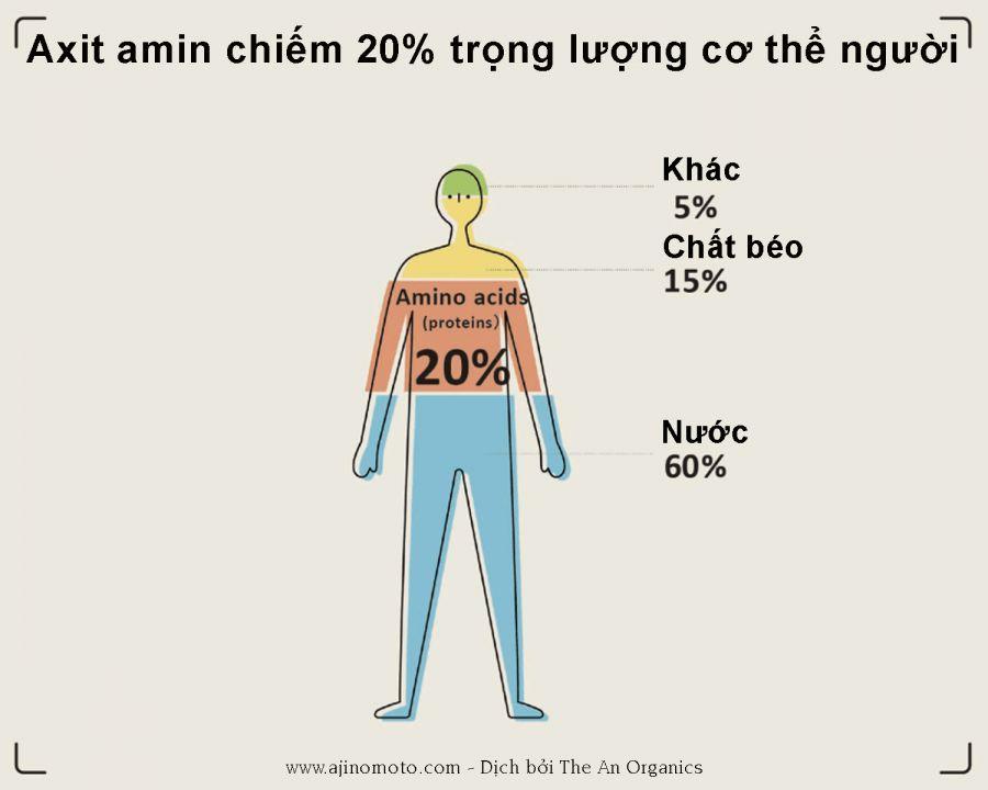 Amino acid (Axit amin) là gì? 2