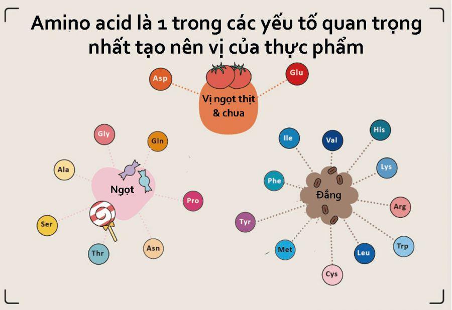 Amino acid (Axit amin) là gì? 6