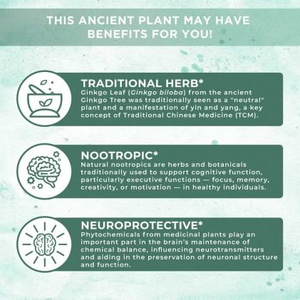 Bổ não hữu cơ Mary Ruth's Ginkgo Leaf 30ml 5